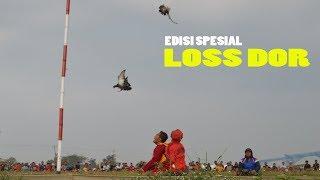 Download Video EDISI SPESIAL Tukikan Super JEDOR | Lomba Merpati Kolong MP3 3GP MP4