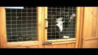 Зоо37 - Служба помощи бездомным животным