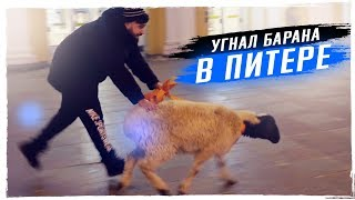 Смотреть видео БАРАН В ЦЕНТРЕ ПИТЕР. Снова дрифт. Новогодние тусовки онлайн