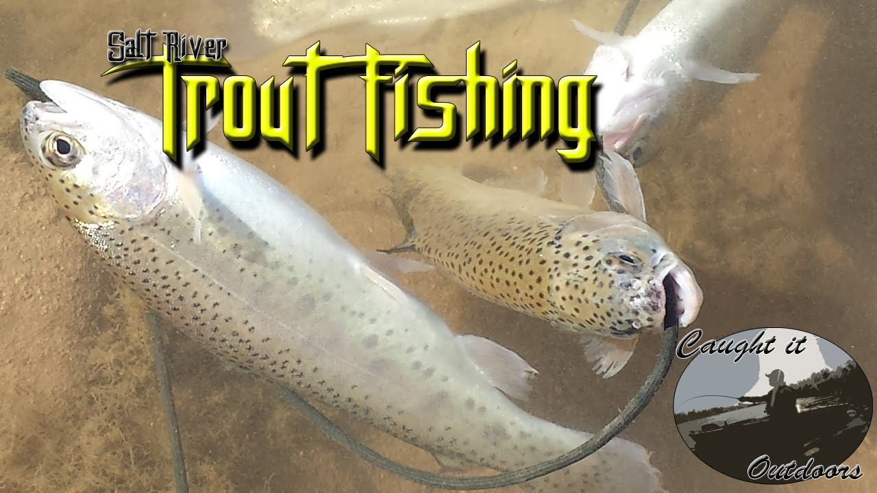 Fly fishing salt river trout fishing youtube for Salt river fishing
