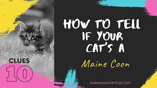 How To Tell If Your Cat Is A Maine Coon: 10 Simple Ways!