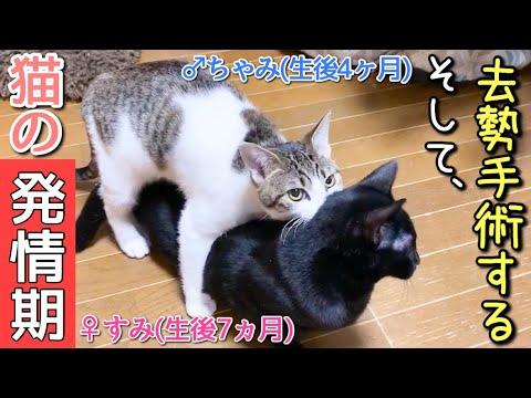 発情 期 猫 オス