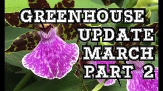 MARCH GREENHOUSE UPDATE PART 2: ORCHIDS, CARNIVOROUS PLANTS AND MORE!