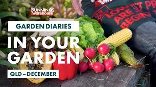 Gardening in December | Queensland | Bunnings Garden Diary