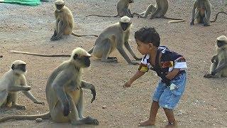 Необычная дружба: малыш-индиец и дикие обезьяны - не разлей вода  (новости)