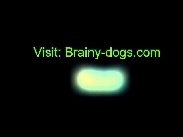 Amazing Super Brain Training For Dogs Books Review | Brain Training For Dogs Books