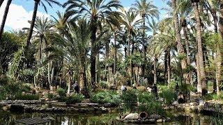 Больше всего пальм в Европе - городок Эльче, Испания [4K]