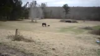 Вот это прикол   собака и лошадь лучшие друзья