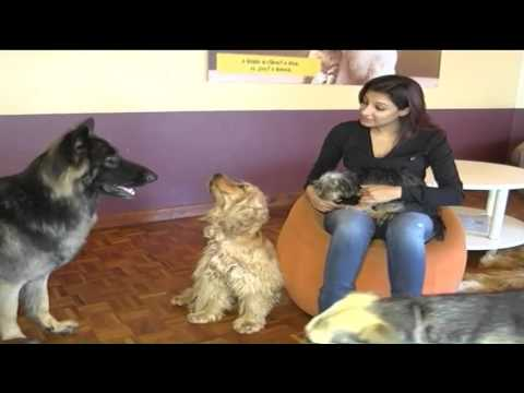 VIP Spa: Kenya's first dog spa