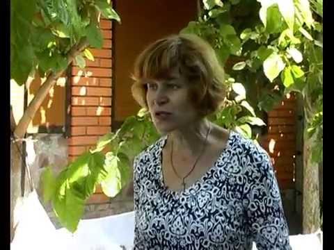 Шелковица — Википедия