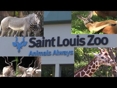 Saint Louis ZOO Missouri