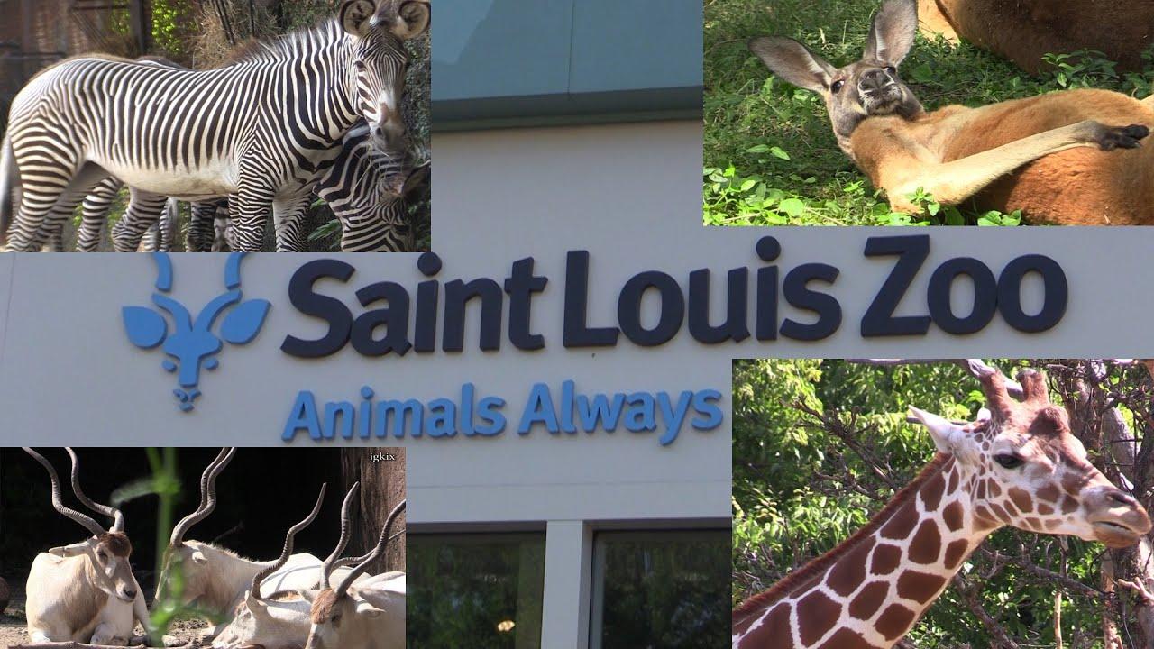 Saint Louis Zoo Missouri - YouTube