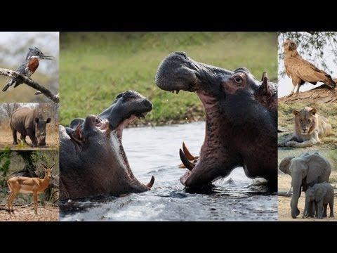 African Wildlife - pictures of wild animals and birds of Africa (photo slideshow)