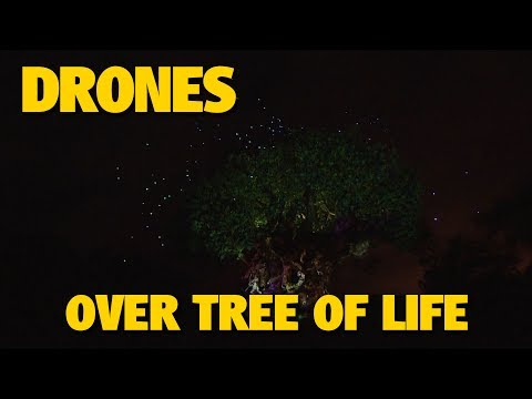 Drones Fly Over Tree of Life at Animal Kingdom | Walt Disney World
