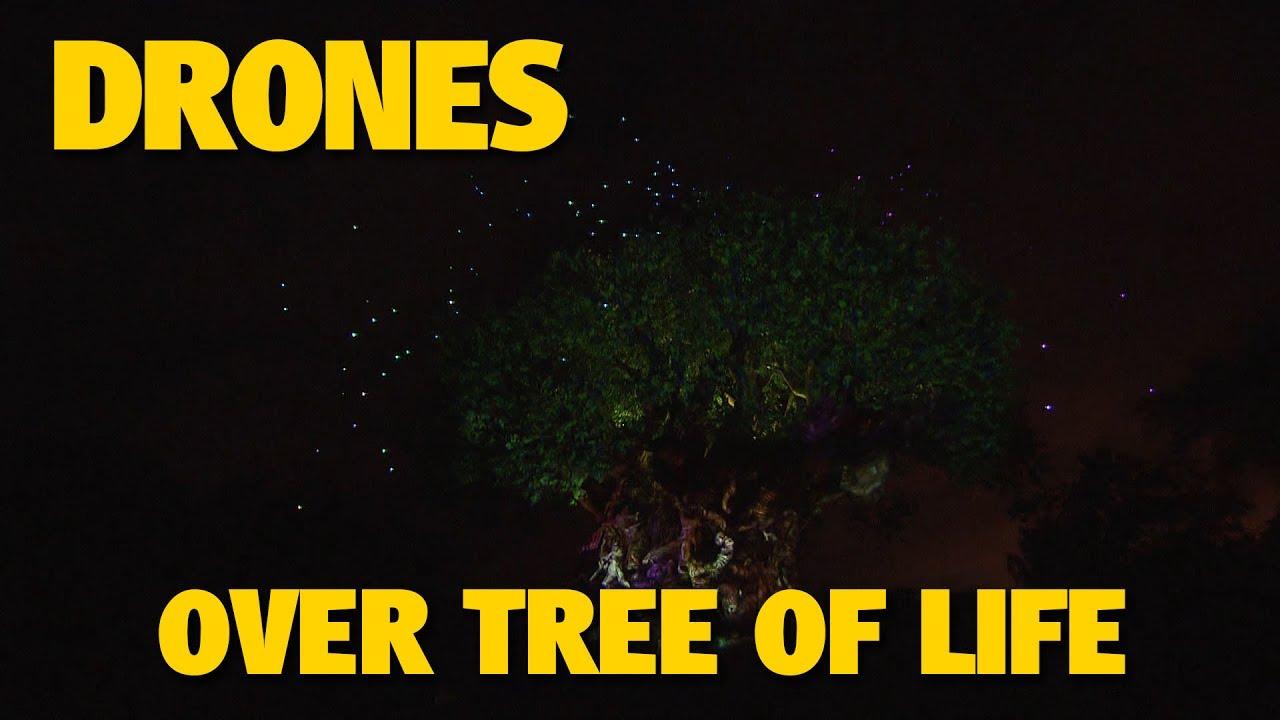 drones-fly-over-tree-of-life-at-animal-kingdom-walt-disney-world