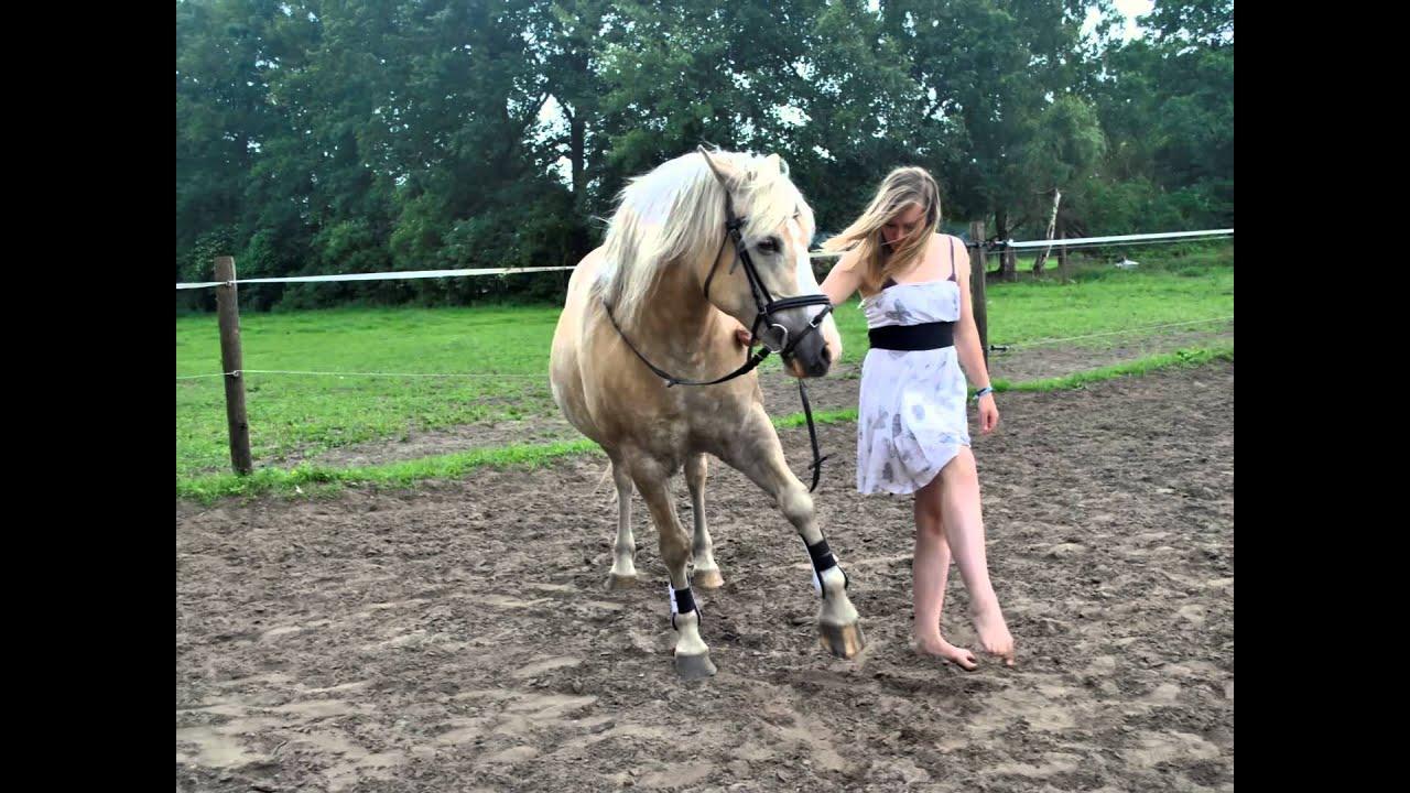 EK Photography Fotoshooting Mit Pferd Und Reiter