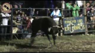 (JUGADAS RECIENTES) Los Toros Castigadores de Rancho La Guadalupana de Pololcingo Gro