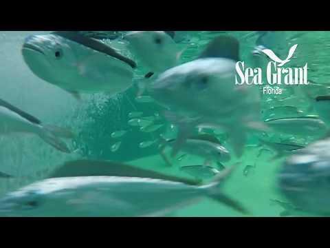 2016-2017 Florida Sea Grant Program Highlights