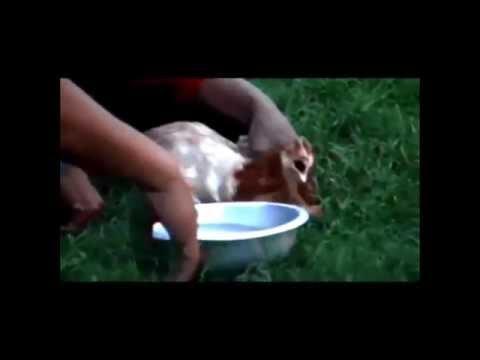 Winti – deel 4 slot (namens Exotische Reizen Suriname)