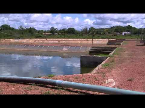 conhe a a piscicultura em tanques escavados em terra firme