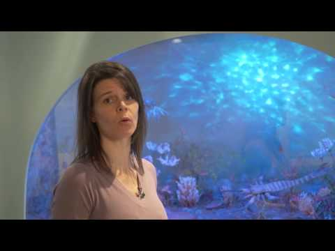 Cincinnati Under the Sea with Brenda Hunda: Ordovician Cephalopods