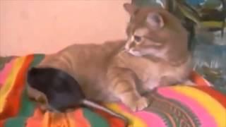 なぜかネズミを抱きしめてしまう優しい猫の動画です。 最後は、猫が・・・