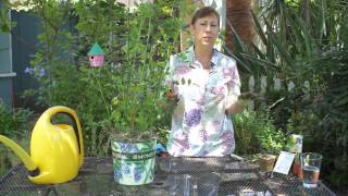 How to Prune Indeterminate Tomatoes : Garden Space