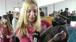 Выставка котов. г. Херсон