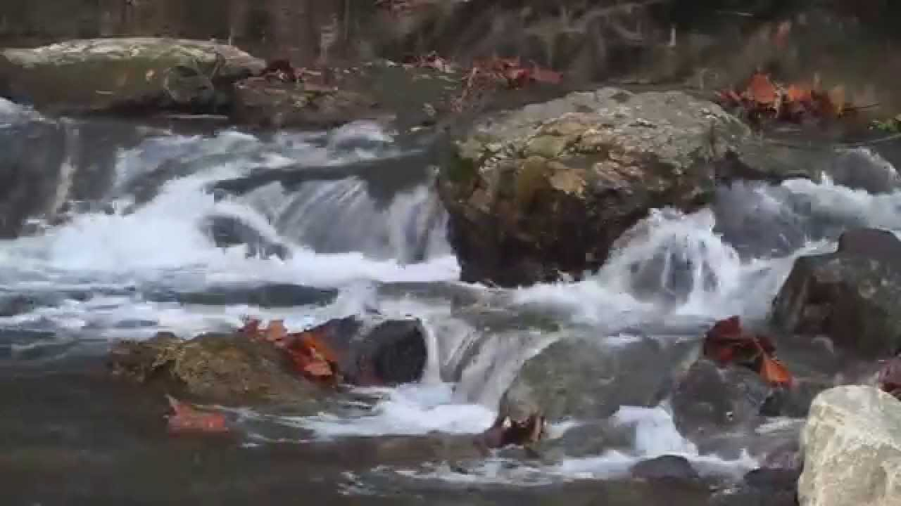 fall foliage map with Watch on River Birch additionally Lake Bob Sandlin moreover Rhapsody In Blue as well 5233180008 also Plant Of The Week Prunus Serrulata Kanzan.