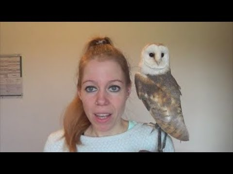 In what countries is it legal to own an owl or a raptor?