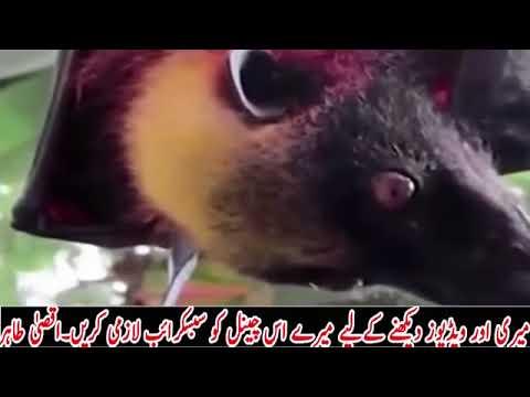 Burma Me Allah Ka Azab Nazilburma Army Pr Janwar Musallat Youtube