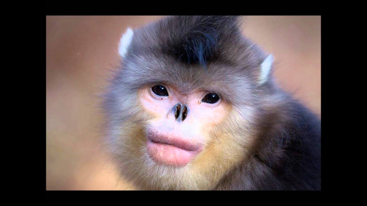 22 animals you didn't know existed - YouTube