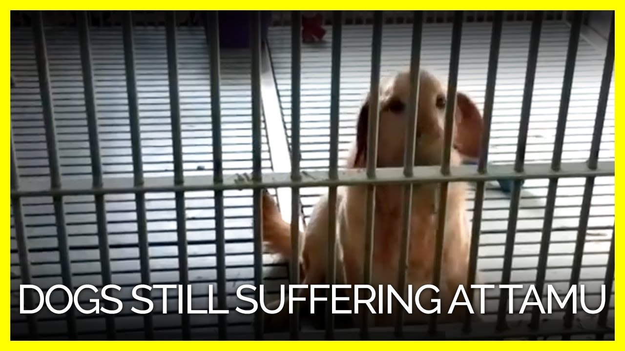 Take Action to End Cruel Experiments on Dogs | PETA