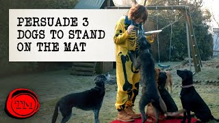Persuade Three Dogs to Stand on the Mat | Full Task | Taskmaster