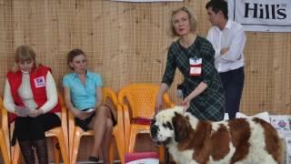 Выставка собак 5.2.17 , чебоксары, сенбернары