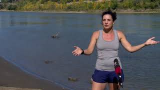 Why does the North Saskatchewan River change colours?