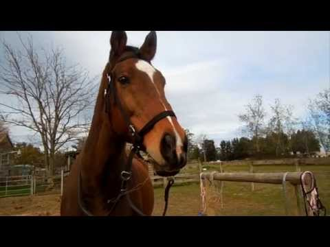 How to Put on and Take off a Cross Under Bitless Bridle