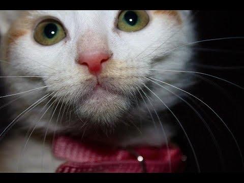 10 Reasons Why Cats are Spiritual Gurus