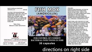 Fish Antibiotics in a Collapse by Dr Bones