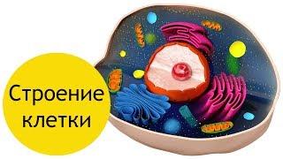 Строение клетки - кратко