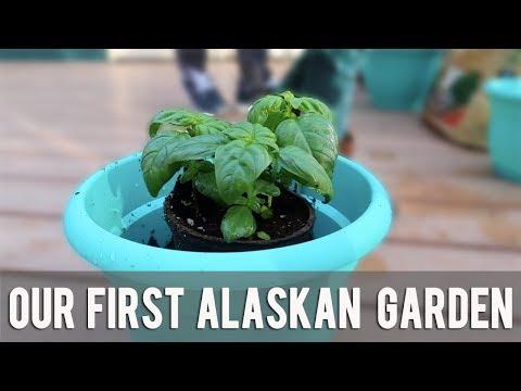 FIRST ALASKAN GARDEN  Living in Alaska