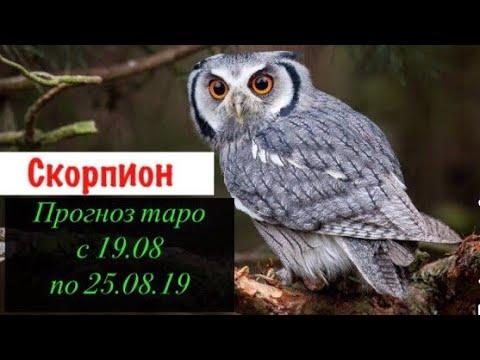 Скорпион гороскоп на неделю с 19.08 по 25.08.19 _ Таро прогноз