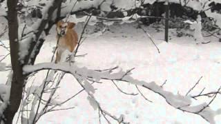 Meine Lady im Schnee