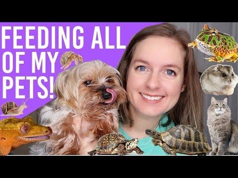 Feeding All My Pets   Pet Routine (14+ Animals)