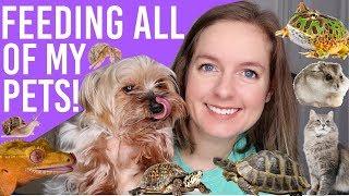 Feeding All My Pets | Pet Routine (14+ Animals)