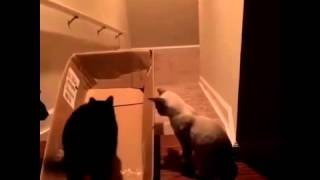 Котики, вперед!
