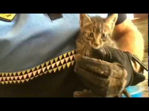 Rescatan a tres crías de gato en una casa abandonada de Arrecife