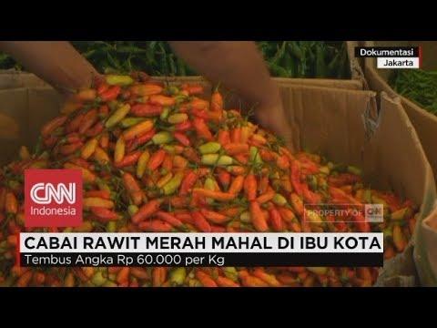 Cabai Rawit Merah Mahal di Ibu Kota Mp3