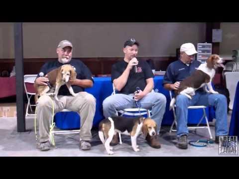 2014 UKC Hunting Beagle World Championship