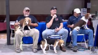 2014 Ukc Hunting Beagle World Championship